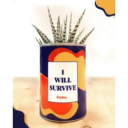 CACTUS I WILL SURVIVE STYLEY (exclusivement en magasin)